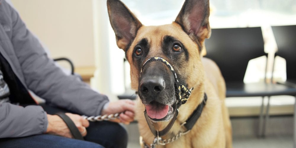 German Shepherd dog in veterinary waiting room