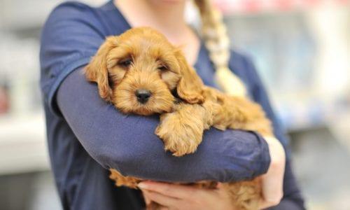 Puppy in nurse's arms
