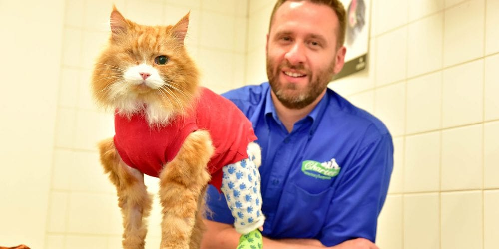 Vet Steve Calveley with Ronnie the cat