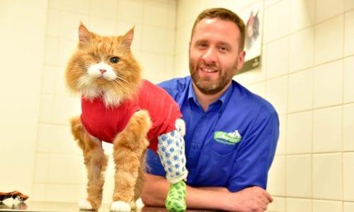 Vet Steve Calveley with Ronnie the cat