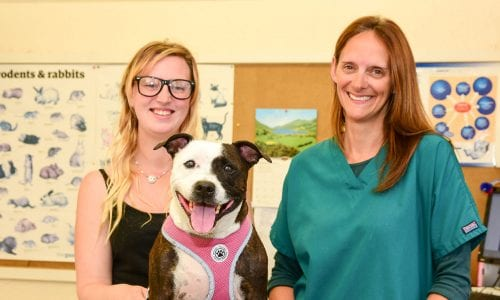 Patch with vet Rachel and owner