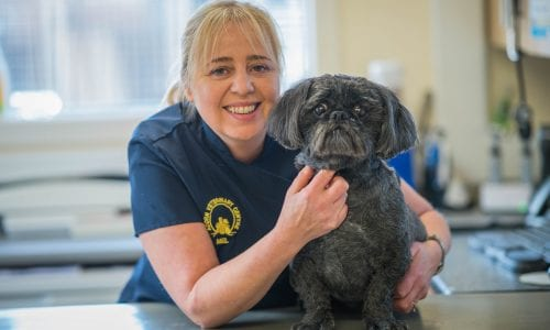 Patch, the Shih Tzu with a rare tumour