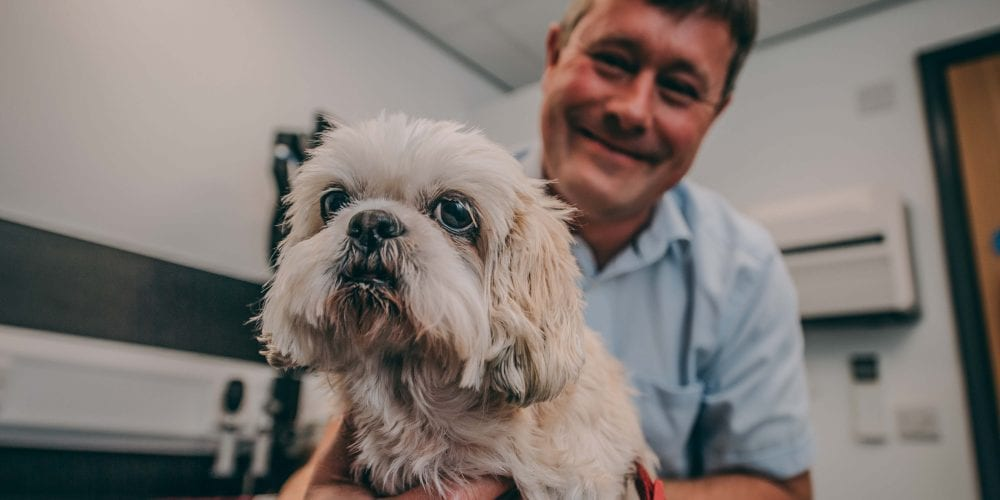 Tasha the Shih Tzu who fell off a narrowboat and got caught in the propeller