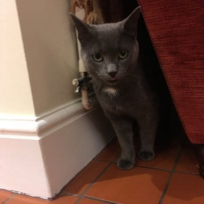 Cat Found in Knutsford