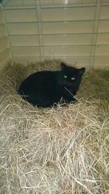 Cat Missing Daresbury