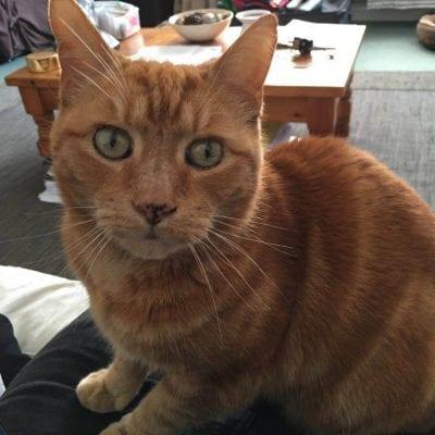 Missing cat Winwick