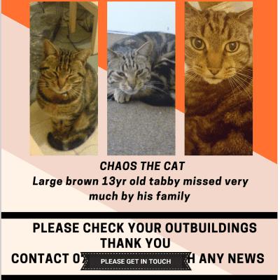 Missing cat Drummond Road