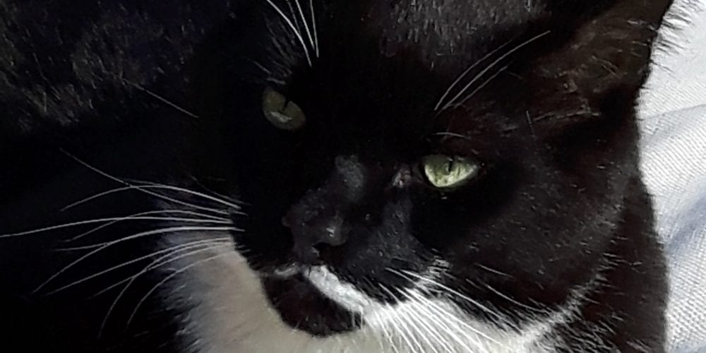 Cat missing from Barnton area