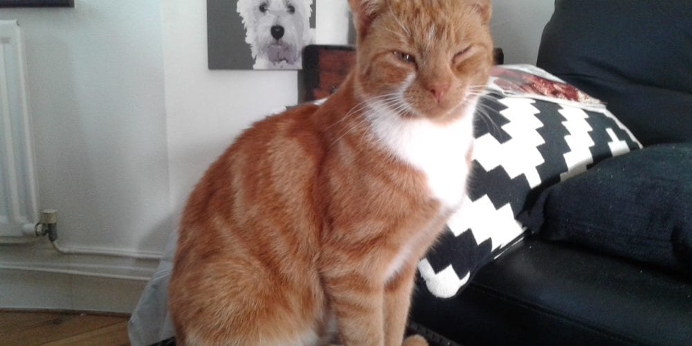 Cat found in Biddulph