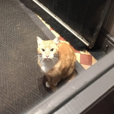 Cat found Ring o'Bells