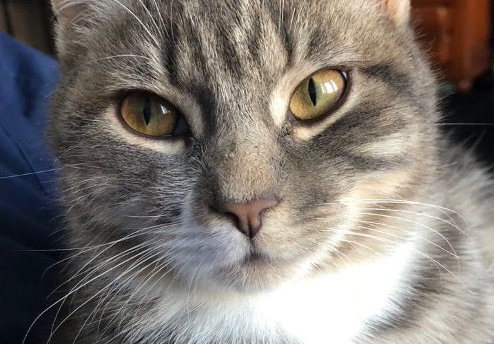 Cat Missing from Lovely lane