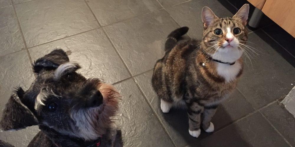 Cat missing Claughton
