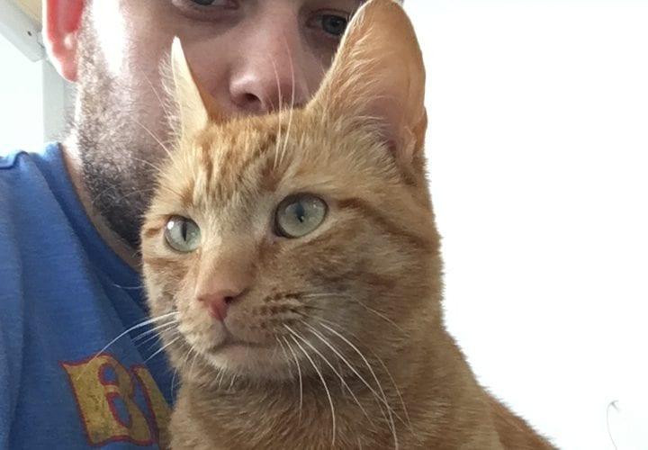 Cat Missing Winnington