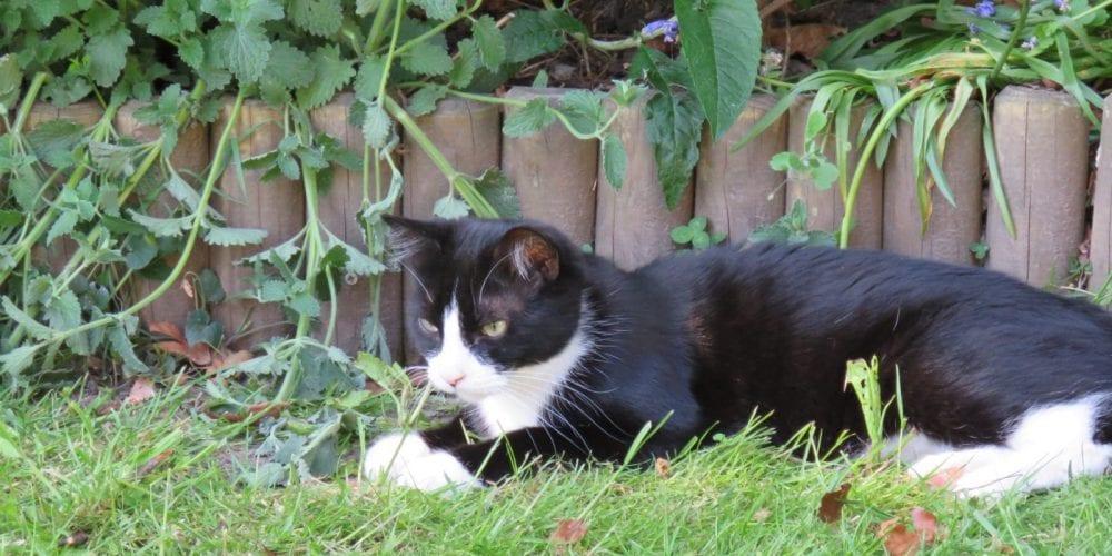 cat missing from Hartford