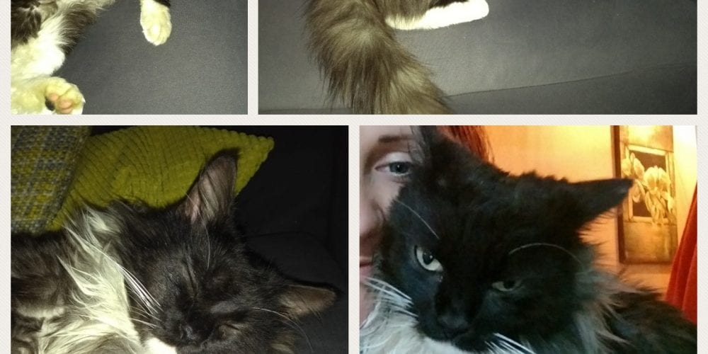 Cat collage 2
