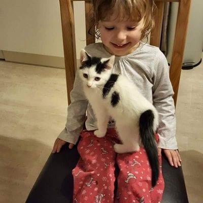 Cat Missing Warmingham Lane, Middlewich