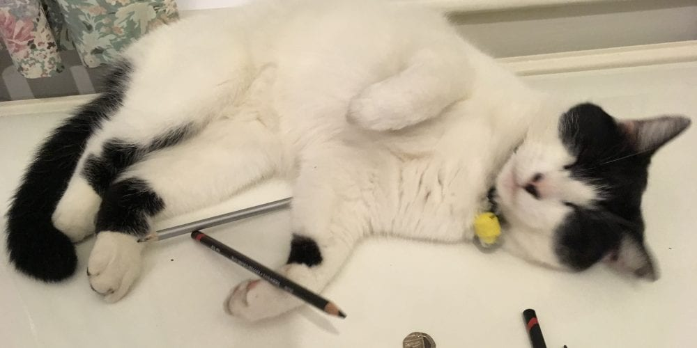 Cat playing with pencils