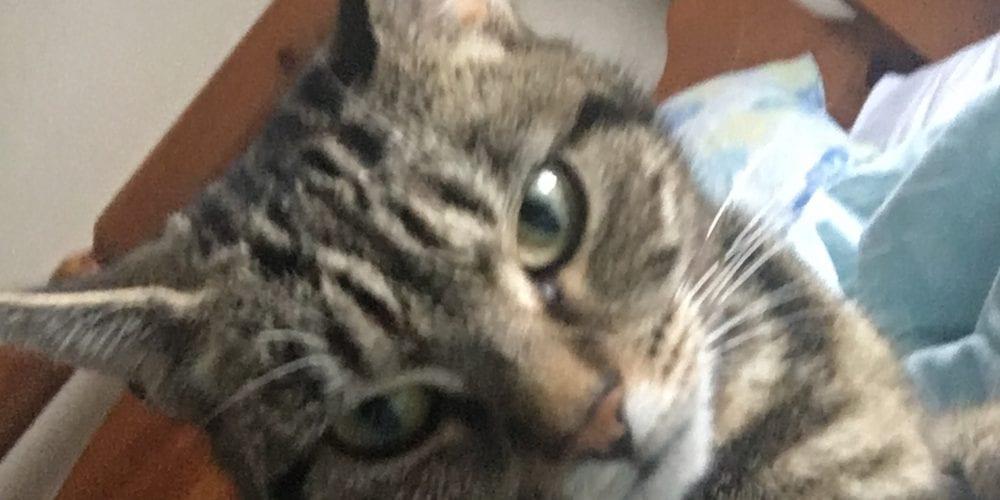 Cat missing Yarwood Close, Northwich