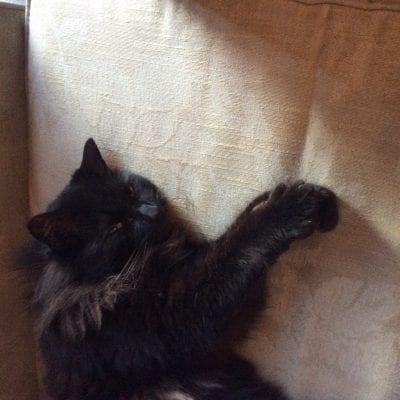 Cat found Shakespeare Road