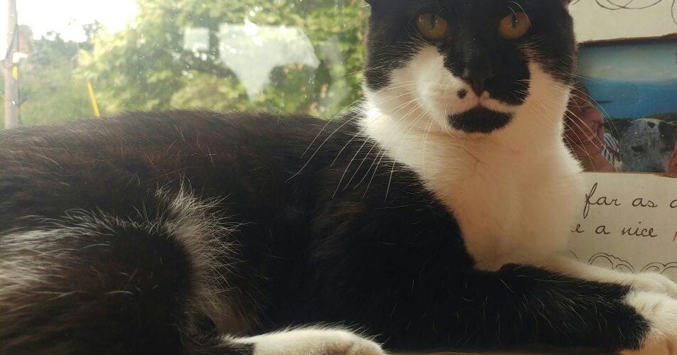 Missing Cat Kelsall