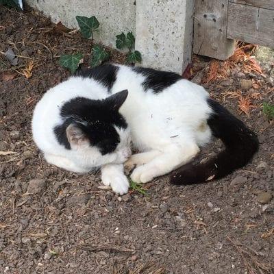 Cat Found Massey Brook