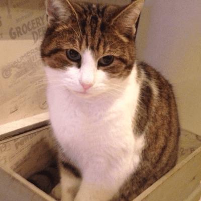Cat missing Church Road Handforth