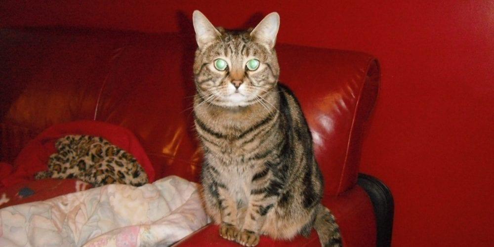 Missing cat Biddulph