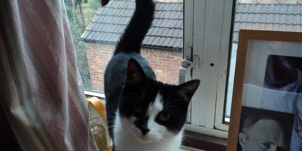 Cat Missing Hale Barns