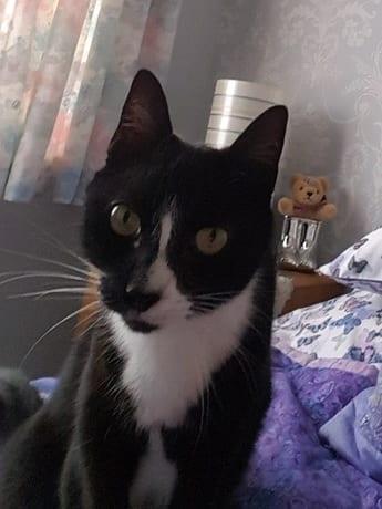 Missing cat Reddish