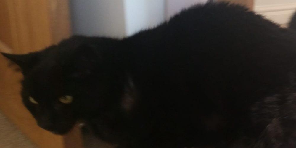 Black cat missing Kingsmead