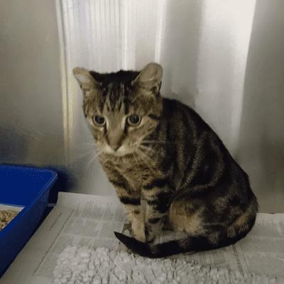 Cat found Winsford