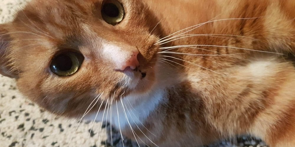 cat missing from Orford